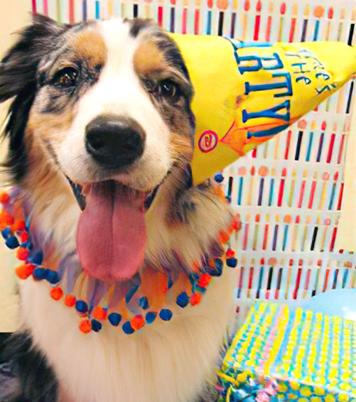 Smiling dog with a birthday hat on