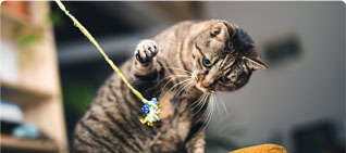 Cat playing with a string toy
