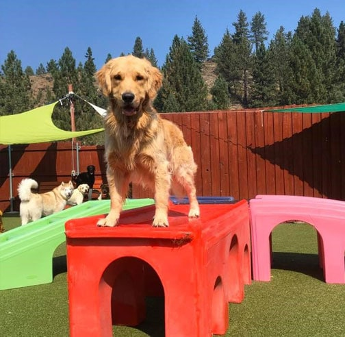 Dog standing on playground equipment