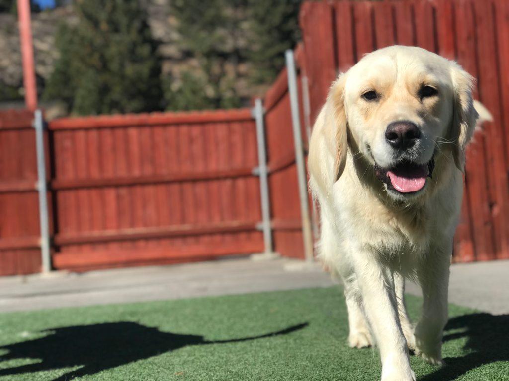 Dog Grooming Reno Nv