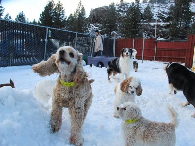 much more than a kennel - come ski and play