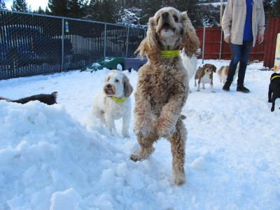 much more than a kennel - come play and ski at Squaw Valley and we will entertain your best friend