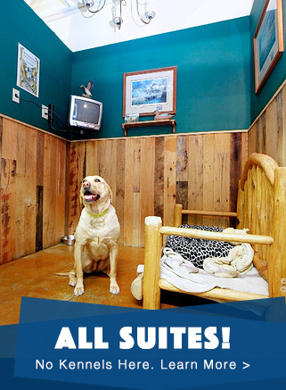 All Suites Dog Boarding
